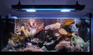 allestire un acquario prezzi store e offerte online