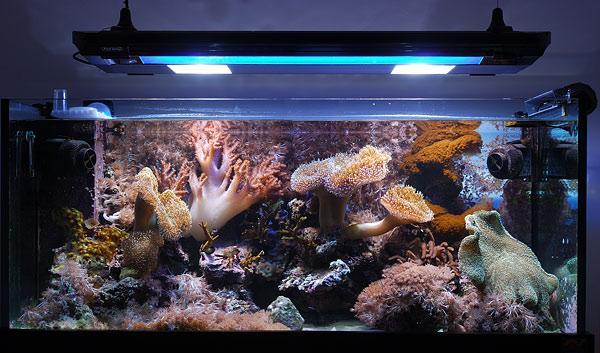 Allestire un acquario prezzi store e offerte online for Acquario casa prezzi