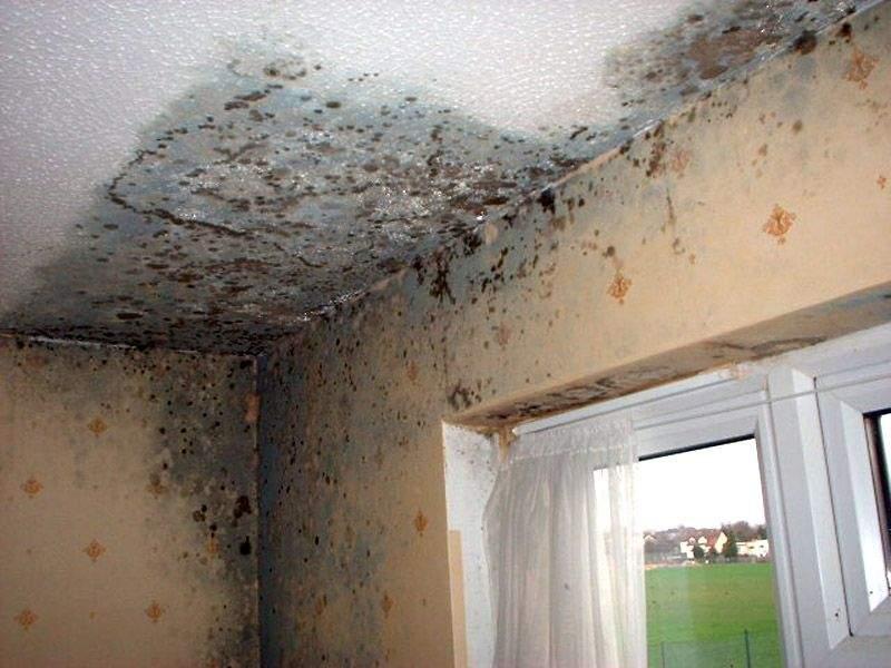 Come togliere la muffa dalle pareti di casa eunethta2014 - Come eliminare la muffa dalle pareti di casa ...