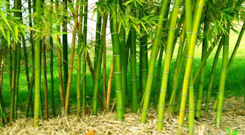 recinzione bamboo