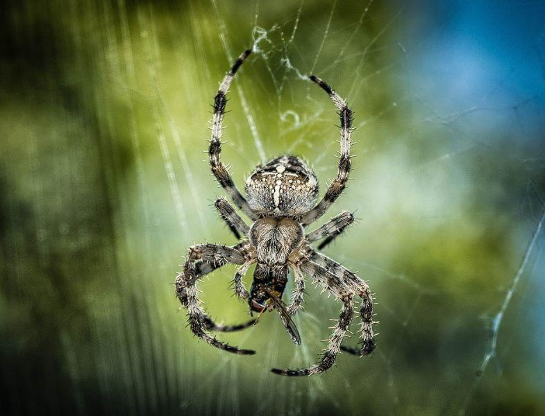 spider-1646340_960_720_785x600